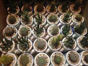 Cactus Con Suculentas En Mini Taza Imagenes De Amistad