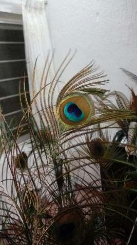 Plumas De Pavo Real Azul