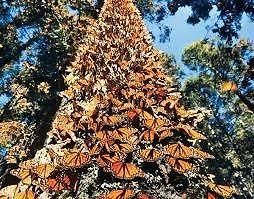 Excursión a la Mariposa monarca y valle de bravo