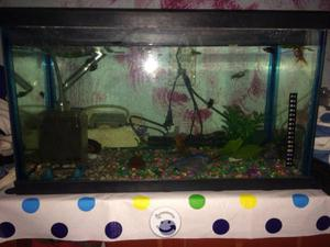 Peces japoneses posot class for Carpa koi costo