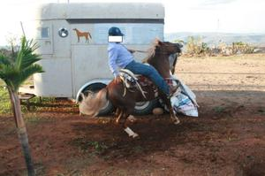 Venta de Pony Gales