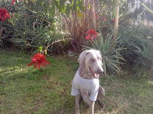 Pensión canina Campestre, Cuidado de Mascotas, Real de