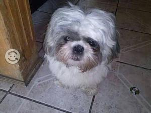 Busco: novia para mi perro