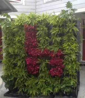 Green walls jardin vertical muro verde en morelia posot for Jardin verde
