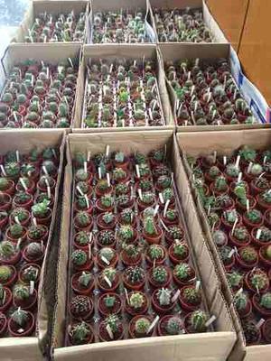 Suculentas Y Cactus Miniatura Gran Variedad.