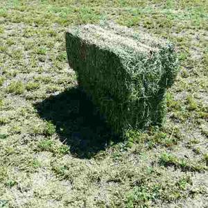 Pacas De Alfalfa Alta Calidad Pregunte Precios Mayoreo