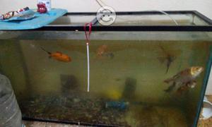 Pecera con distintos tipos de peces