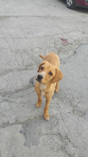 Perrita en adopcion cachorrita 4 meses satelite