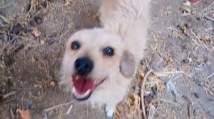 Perro raza única hembra adopción