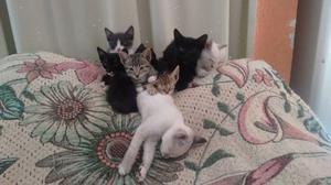 gatitas y gatitos en adopción
