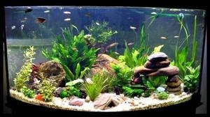 Pecera 250 litros de agua dulce con peces posot class for Peces de agua dulce para peceras