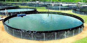 Plantas para estanques nenufares posot class for Construccion de estanques circulares cria y engorda de mojarra tilapia
