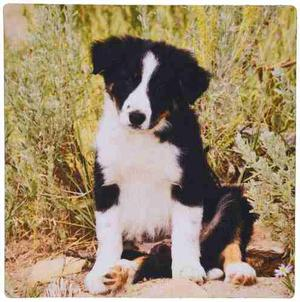 3drose Border Collie Puppy Dog Na02 Pwo Piperanne -rosa