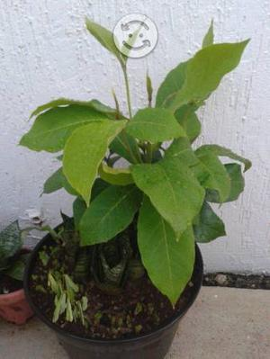 Preciosas plantas