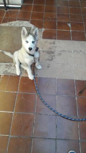 Kínder y guarderia Canina, cursos a domicilio