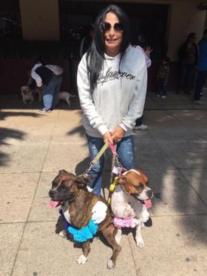 Pension para perros en Cuautla, Mor