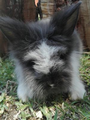conejos guadalajara