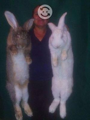 Conejos de mascota