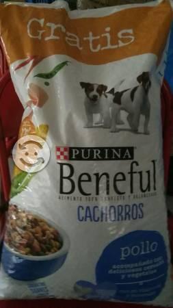 Alimento para cachorro 11kg
