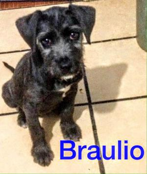 Adopta a Braulio