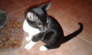 gatito 3.5 meses macho, limpio casero hace en arenero solo