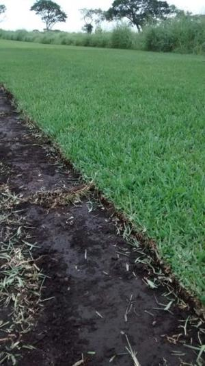 pasto verde de calidad