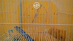 hamsters hembras con jaula