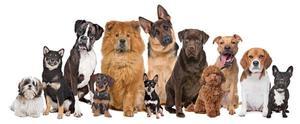 Oreja de perro. Alojamiento para perros en Tequis