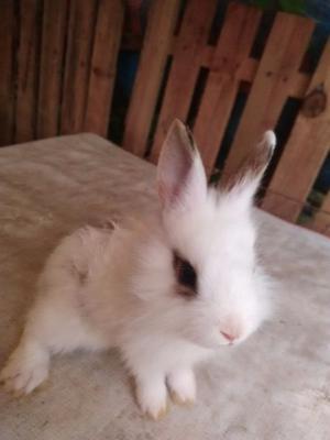 Conejos - Anuncio publicado por tony_leo77