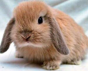 Conejos Gondel