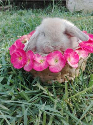conejos de granja