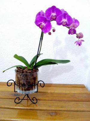 Porta macetas de herreria triciclo posot class - Macetas para orquideas ...