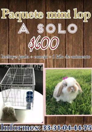 Conejos - Anuncio publicado por zelgy