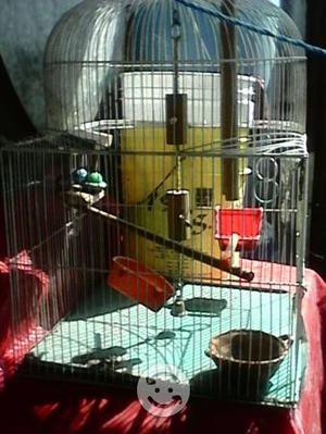 Jaulas grandes para pájaros