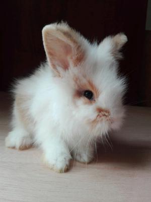 conejos fotos reales