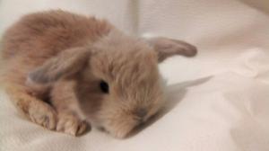 Conejos y jaulas