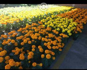Se vende flor