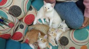 adopta un lindo gato