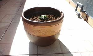 Cactus Flor de una Noche