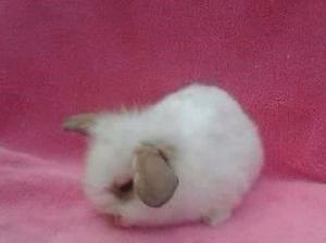 Conejos - Anuncio publicado por belindavi
