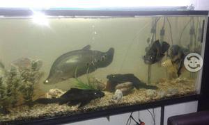 Pecera con base de metal y peces grandes