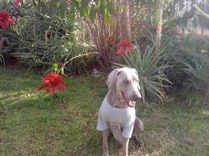 Pensión Canina Campestre, Cuidado de Mascotas,