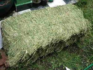 1 Kg Heno De Alfalfa Conejos Roedores Cuyos Chinchillas