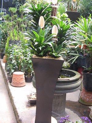 Macetones tipo minimalistas con plantas naturales