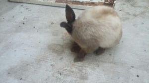 Conejo - Anuncio publicado por Abdiel