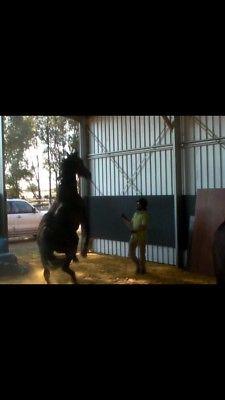 Servicio a caballos!