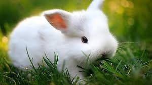 Conejos e instalaciones en venta.