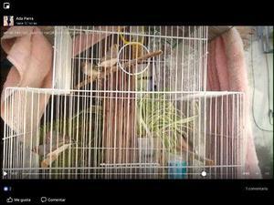 Finches - Anuncio publicado por Juarez Parra Ada