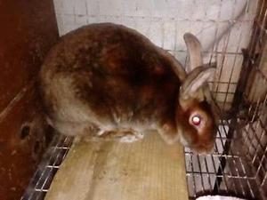 Vendo criadero de conejos