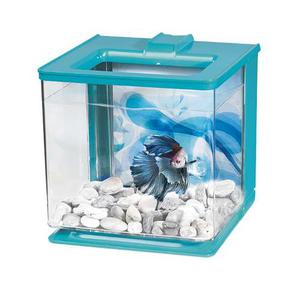 Betta Kit Ez Care 2lts Marina Acuarios Peceras Peces
